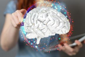 I campi di applicazione della neuroscienza