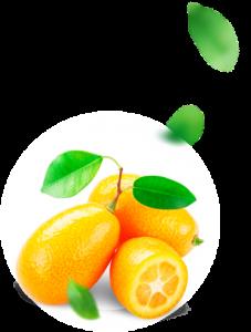 Fortunella - composizione - funziona - come si usa - ingredienti